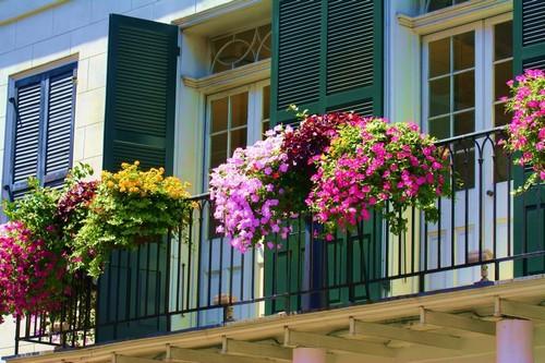 balkonnye-cvety-09